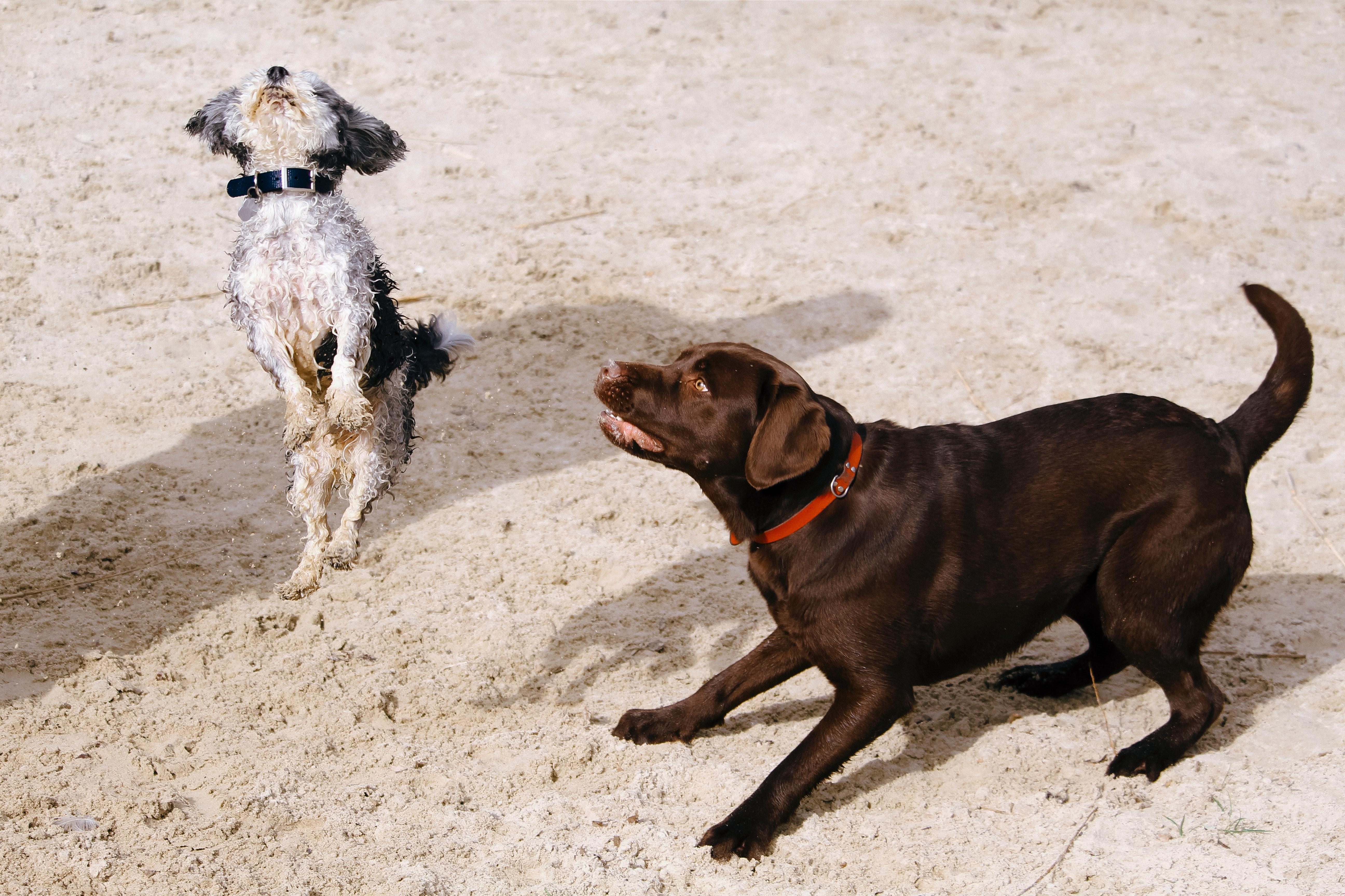 us dog training course