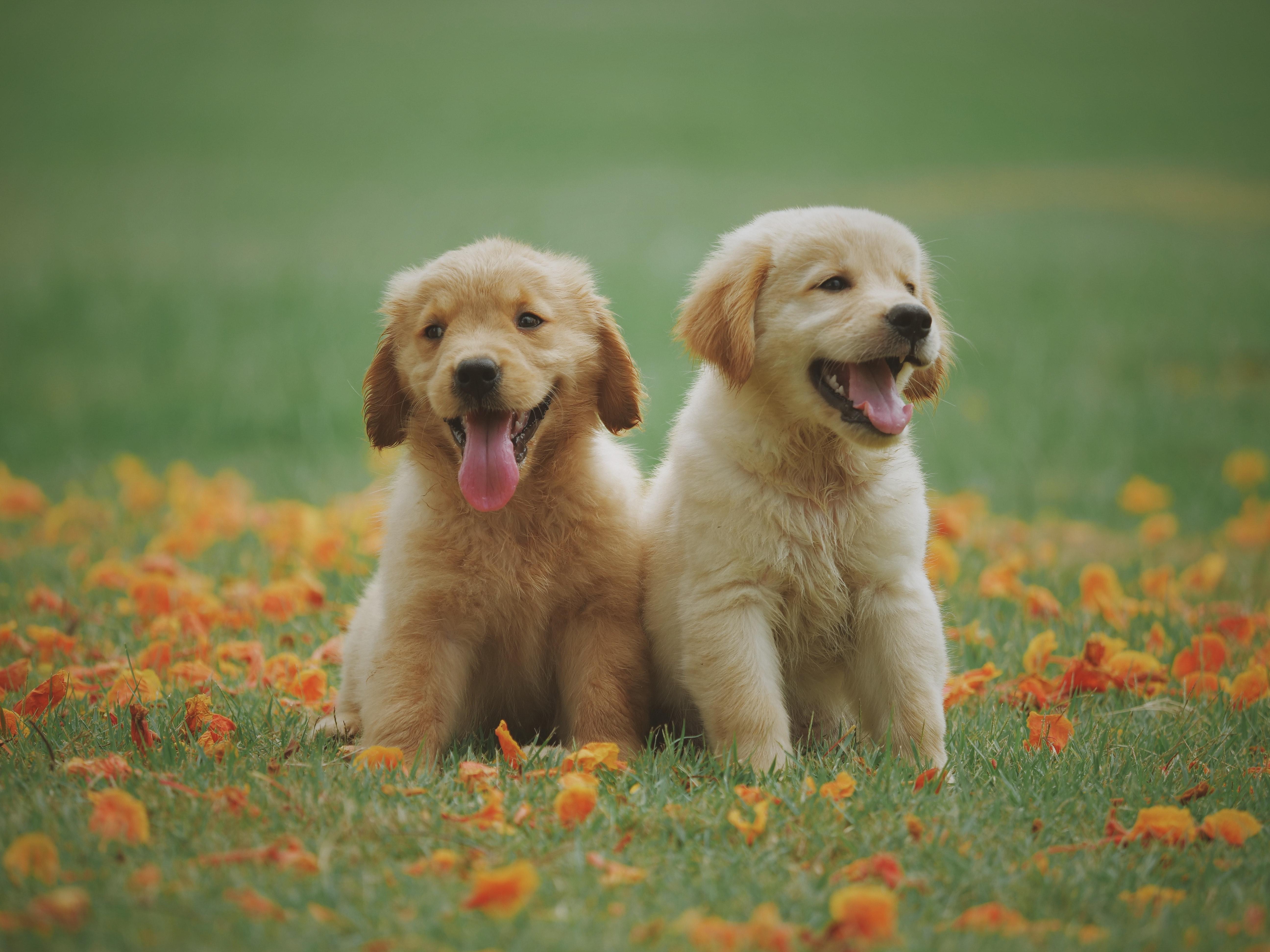 canine behaviour course