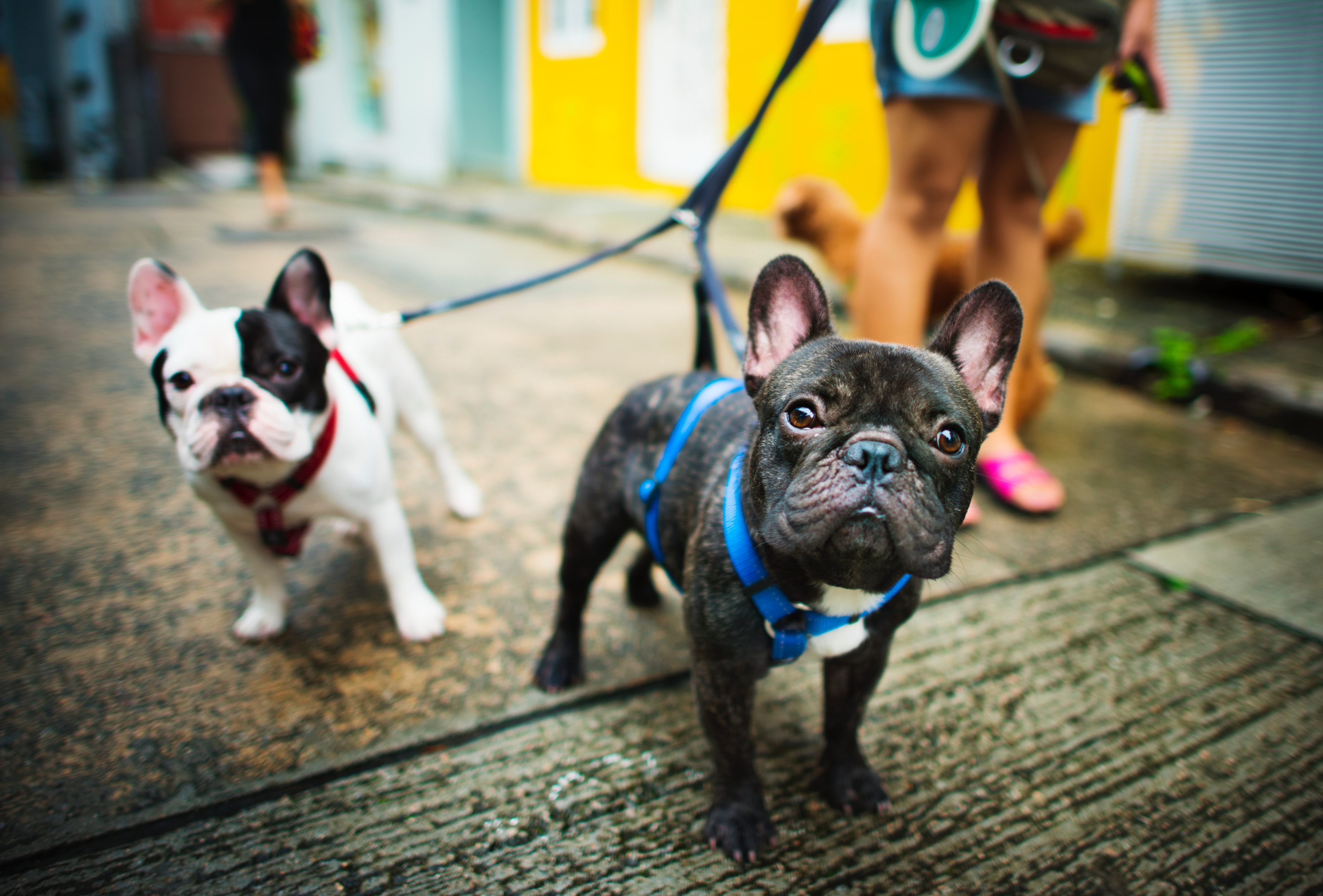 canine behaviour courses