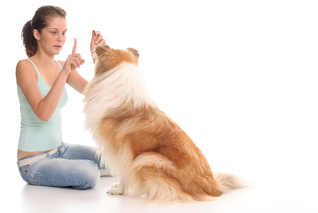 canine behaviour courses ireland