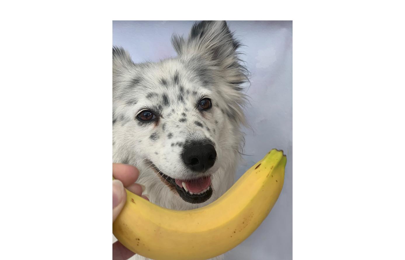dog trainer course uk