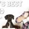 best dog training course